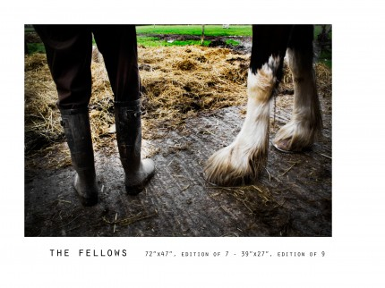 _____THERAWHORSE_catalogue12