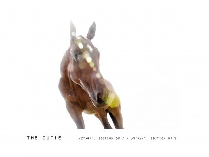 _____THERAWHORSE_catalogue31