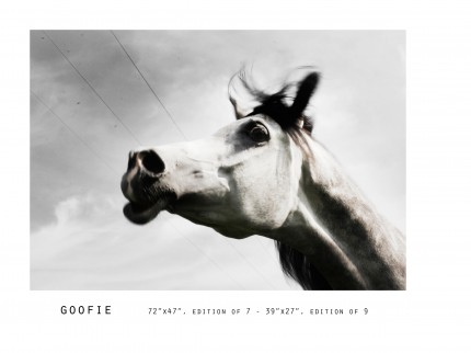 _____THERAWHORSE_catalogue37