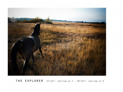 _____THERAWHORSE_catalogue47